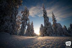 January scenery on top of Ounasvaara fell in Rovaniemi, Lapland, Finland. Lapland Finland, Winter Scenery, Winter Time, Arctic, Winter Wonderland, Denmark, Norway, Alaska, January