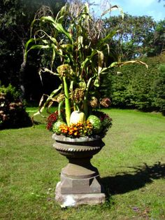 Backyard Focal Point    A century-old brownstone pedestal and urn create a dramatic outdoor focal point when filled with corn plants, mums and gourds.   How fun!!!