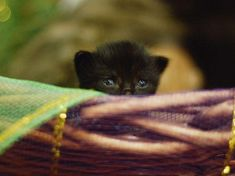 Black Cats Are Rejec Black Cats Are Rejected Because They 'Don't Show Up in Selfies' But We Love Them - Woman's World Cute Cats And Kittens, Big Cats, Kittens Cutest, Black Kittens, Kitty Cats, Cat Site, Cat Whisperer, F2 Savannah Cat, Cute Black Cats