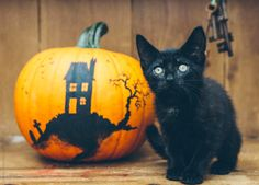 Black cat with decorated pumpkin for halloween. by kkgas - Stocksy United Chat Halloween, Halloween Fotos, Halloween Horror, Halloween Pumpkins, Fall Halloween, Halloween Ideas, Halloween Season, Halloween Stuff, Vintage Halloween