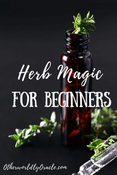 Herb Gardening Herb Magic for Beginners: Steps to Working with Herbs Wicca Herbs, Witchcraft Herbs, Magick Spells, Healing Herbs, Medicinal Plants, Natural Healing, Magic Herbs, Herbal Magic, Plant Magic