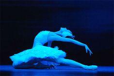 Swan Lake - White swan