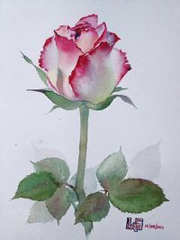 Risultato immagine per watercolor flower images Watercolor Rose, Watercolor Cards, Watercolour Painting, Painting & Drawing, Watercolors, Watercolor Flowers Tutorial, Watercolor Pencils, Abstract Watercolor, Flower Images