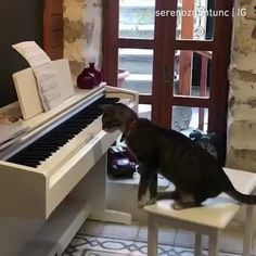 More talent than most artists today 🔊⠀ - Carola Cute Funny Animals, Cute Cats, Funny Cats, Kitten Love, I Love Cats, Beautiful Cats, Animals Beautiful, Kinds Of Cats, Cat Whiskers