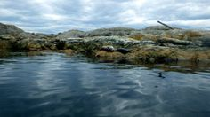 Hide and seek Harbour Seals (great camouflage)