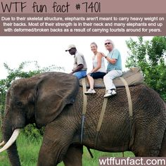 Why you shouldn't ride on elephants - FACTS