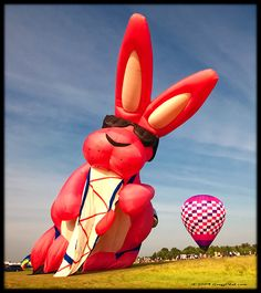 """Bunny takes a break from """"going and going""""..."""