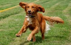 How to Avoid Ruining your Dog's Recall | Australian Dog Lover - These perfect recalls (meaning your dog will come to you every time) rarely exist in the real world yet they can be a life saver in many situations.