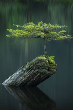 Are you interested in getting an indoor bonsai tree? If you are, then you definitely need to learn about how you can take good care of your tree so that it will survive life indoors. Bonsai Tree Care, Indoor Bonsai Tree, Mini Bonsai, Bonsai Garden, Garden Plants, Jardin Zen Miniature, Plantas Bonsai, Unique Trees, Tree Photography