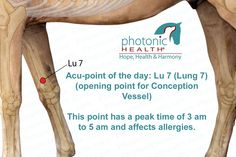 Acu-point of the day! Lung 7 Want to learn more? Sign up for one of our courses! Click here for more info - http://bit.ly/1bk4pb5