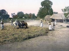 Image of Threshing grain, Bosnia, Austro-Hungary. This color photochrome print was taken between 1890 and 1900 in Bosnia, Austro-Hungary.