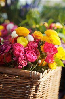 Ranunculus Growing & Caring Tips