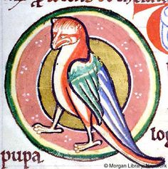 Bestiary: Hoopoe -- Hoopoe, within medallion. Bestiary England, possibly in Lincoln or York, ca. 1185.