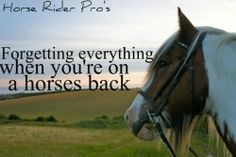 Equestrian Quotes and Sayings | Visit workhardplay-harder.tumblr.com