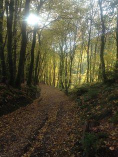 La Roche en Ardenne autumn