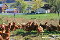Please support #FamilyFarms. http://www.peteandgerrys.com