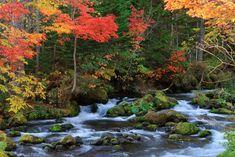 Autumnal leaves in the Oirase Valley, Aomori Prefecture (© tomocam - Fotolia.com)