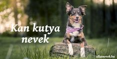 Kan kutya nevek ABC szerint - Állatnevek Dogs, Animals, Animales, Animaux, Pet Dogs, Doggies, Animal, Animais