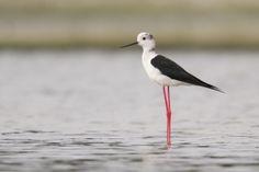 Nieuws | Natuurpunt : natuurherstel in Averbode Bos & Heide levert acht nieuwe vogelsoorten op.
