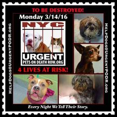TO BE DESTROYED 03/14/16 - - Info  Please Share:   Please Share! Please Share: -  Click for info & Current Status: http://nycdogs.urgentpodr.org/to-be-destroyed-4915/