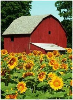 Eight Free Small Farm and Hometead Barn Plans from the Ag Center at Louisiana State University