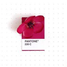 Tiny Objects Pantone