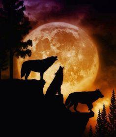 Luna y lobos