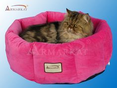Armarkat Cozy Pet Bed Diameter, Pink Size: 15 inchLarge x 15 inchW x 7 inchH Chihuahua Dogs, Pet Dogs, Pets, Puppies, Kitten Beds, F2 Savannah Cat, Free Base, Wild Bird Food, Pink Cat