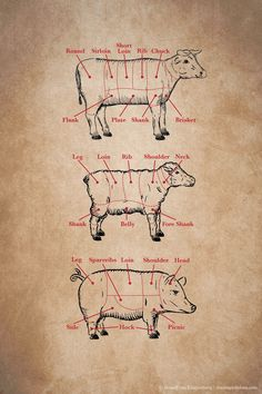 Have you checked out the Kitchen 101 Meat Cuts post yet? Learn all about your favorite cuts of beef, pork and lamb!