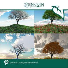 #Doğa fotoğrafçılığı ile ilgilenenler; #Narven'de #Bolu doğasının muhteşem renkleri sizi bekliyor! #doğal #renk #Bolu