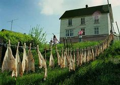 Fish drying on a clothesline in Parker's Cove, Placentia Bay Newfoundland Canada, Newfoundland And Labrador, Newfoundland Recipes, Camping In Ohio, Camping Cabins, Canadian Art, Canadian Cuisine, Atlantic Canada, Clothes Line