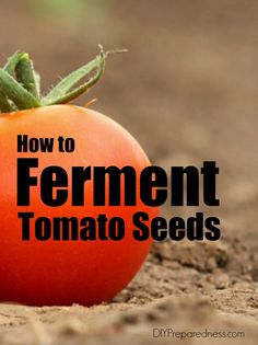 Thinking about your garden for next year? Be sure to save the seeds from heirloom plants you grow this year. Learn how to ferment your tomato seeds   DIY Preparedness