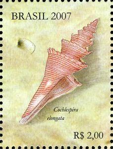 Sea Snail (Cochlespira elongata)