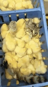 Titti e I suoi fratelli contro gatto Silvestro