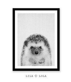 Safari Animals, Woodland Animals, Animals And Pets, Baby Animals, Cute Animals, Animal Spirit Guides, Spirit Animal, Art Supplies Storage, Hedgehog Art