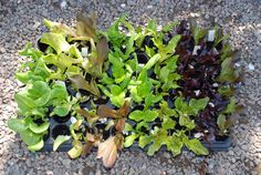 Massor av grönsaker på liten yta! | ekoplantan