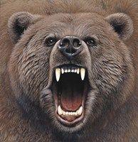 Framed Bear 2