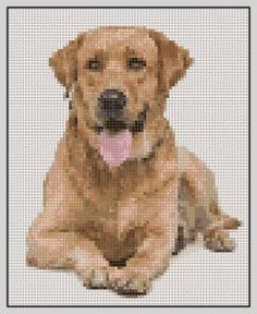 Free Labrador Retriever Cross Stitch Pattern