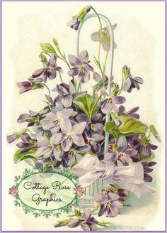 Basket of Violets LARGE format digital by CottageRoseGraphics