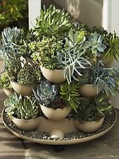 Patio / Porch Garden Planter with Cactus - eclectic - indoor pots and planters…