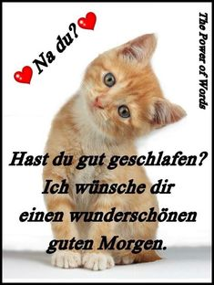 good morning pictures with cats – Gb pictures Good Morning Funny, Good Morning Picture, Morning Pictures, Morning Humor, Morning Pics, Video Games For Kids, Kids Videos, Image Clipart, Montage Photo