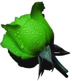 Green roses anyone...