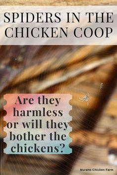 Cute Chickens, Raising Chickens, Backyard Chicken Coops, Chickens Backyard, Chicken Story, Chicken Pictures, Guinea Fowl, Chicken Humor, Spoiled Rotten
