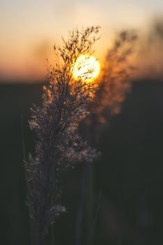Nature Photography Flowers, Aesthetic Photography Nature, Nature Aesthetic, Sunset Photography, Landscape Photography, Beautiful Nature Scenes, Beautiful Nature Wallpaper, Beautiful Landscapes, Landscape Wallpaper