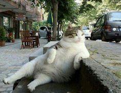 Image à la Une Chat obèse qui se repose... il digère ? ou observe les humains ?