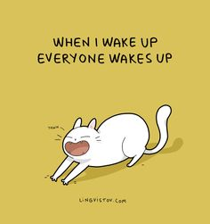 """""""When I wake up everyone wakes up"""" freaking cats"""