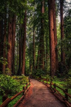 ~Redwood Path ~ John Muir Trail, California by Justin in SD~