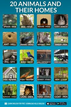 animals and their homes, #englishvocabulary