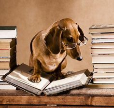 20 best images about Dogs and books on Pinterest | Book worms, Good books and Girl reading