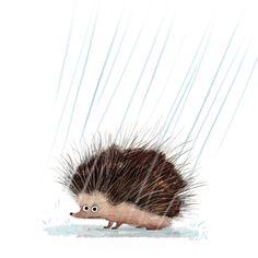 Hedgehog in the rain